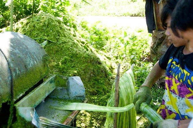 Eco cuero de origen vegetal